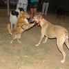 Dog  new boy, Mimi_002
