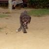 Coco (pup)_003