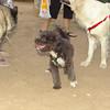 Coco (pup)_001