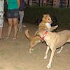 Dog  new boy, Mimi_001