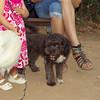 Coco (pup)_002