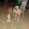 Dog  new boy, Mimi_003