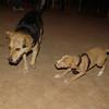 Arenita, Maddie, Mommy, Puppy