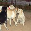 Dina (girl pup)_001