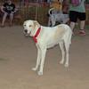 Dog Ayaora_001