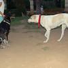 Dog Ayora, Trosky_001