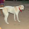 Dog Ayaora_002
