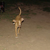Arenita (puppy girl)_008