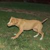 Arenita (puppy girl)_004