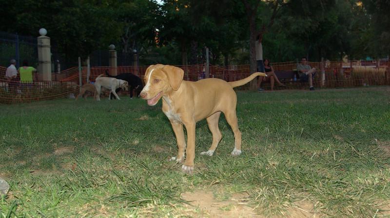 Arenita, puppy, girl, ayora, friend