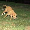 Arenita (puppy girl)_002