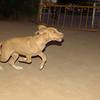 Arenita (puppy girl)_009