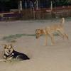 Copo (pup), Maddie_001