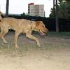 Copo (pup boy 9 mo )_004