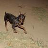 Brutus (boy pup)_003