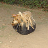 Copo (pup), Maddie_004