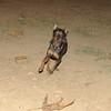 Brutus (boy pup)_002