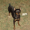 Brutus (boy pup)_004