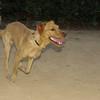 Copo (pup boy 9 mo )_002