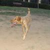 Copo (pup boy 9 mo )_006