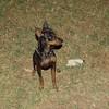 Brutus (boy pup)_005