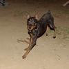 Brutus (boy pup)_006