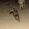 Brutus (boy pup)_001