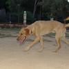 Copo (pup boy 9 mo )_001