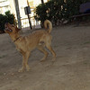 Copo (pup boy 9 mo )_003