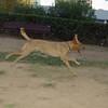 Copo (pup boy 9 mo )_005