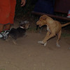 Arenita, dog yorkie_001