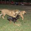 Arenita, Sasha, Brutus_002