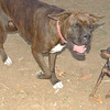 Brutus, Dana (girl boxer)_001