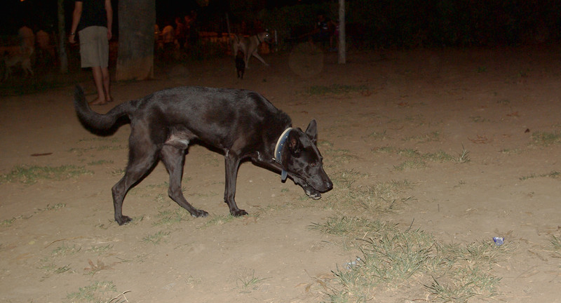 Boy new dog_001
