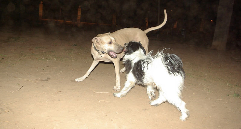 Mimi, Boy dog_001