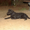 Firolay (puppy boy 5mo )_011