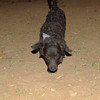 Firolay (puppy boy 5mo )_012