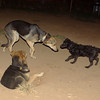 Firolay, Maddie, other dog_001