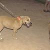 Duna (puppy), Maddie_001