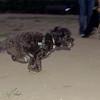 Coco (boy pup)_001