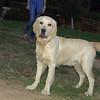 Bruce (pup boy)_001