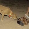 Duna (puppy), Xiquet_001