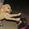 Duna (puppy girl)_001