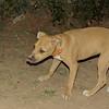Duna (puppy girl)_002