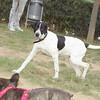 Braco (pup boy)_002