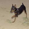 Brutus (pup boy)_003