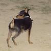 Brutus (pup boy)_002