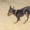 Brutus (pup boy)_001
