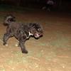 Coco (boy pup)_004