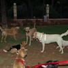 beagle, mimi, Lleuna, nela, maya_001